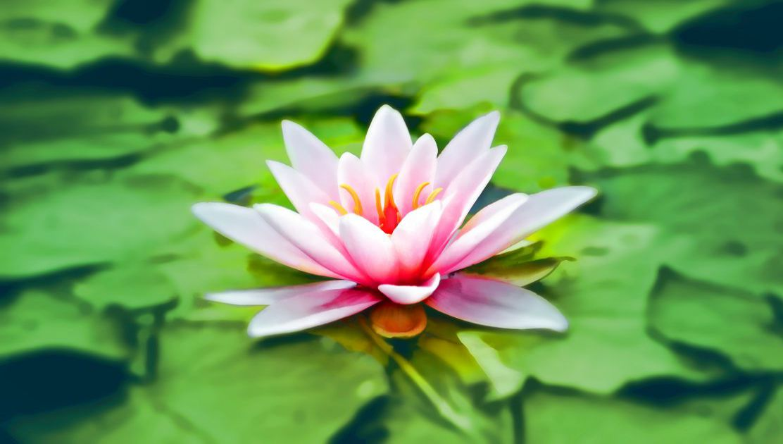 Como é que a meditação e a felicidade se relacionam?
